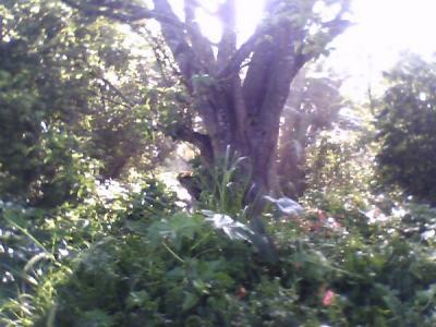 20101124040506-higueron-con-sol.jpg