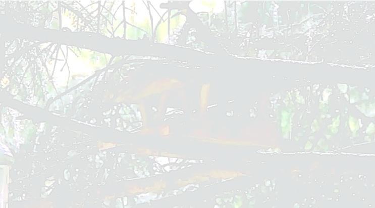Lluvia / Roberto Bolaño / Rain
